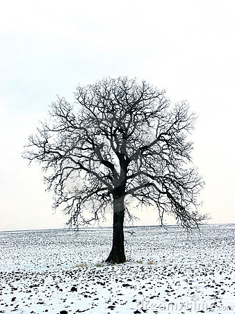Free Tree In A Winter Field 1 Stock Images - 398604