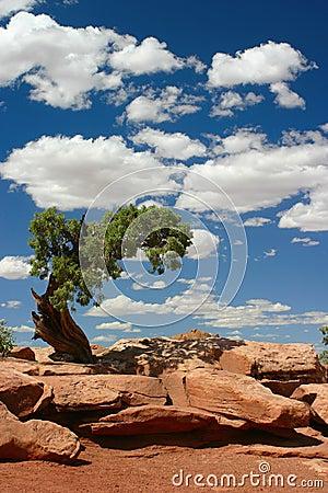 Free Tree In Desert Royalty Free Stock Photo - 1502175