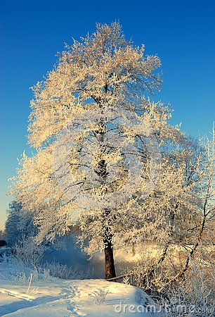 Free Tree In Frost, Winter Morning Royalty Free Stock Photos - 140131998