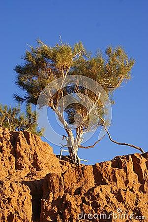 Free Tree In Mongolia Stock Photo - 22590150