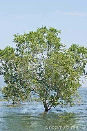 Free Tree In The Lake, Flood Royalty Free Stock Photography - 18004767