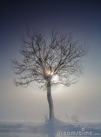 Free Tree In Winter Royalty Free Stock Photography - 20875637