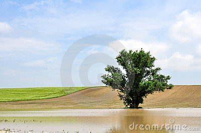 A tree in the inland water