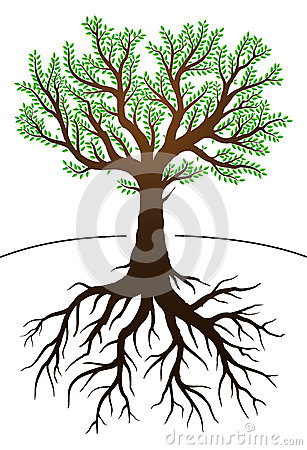 Tree and its roots