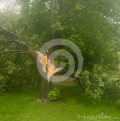 Free Tree Knocked Down Due To Heavy Winds Stock Photo - 93193210