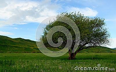 Tree on Kyrgyzstan steppes