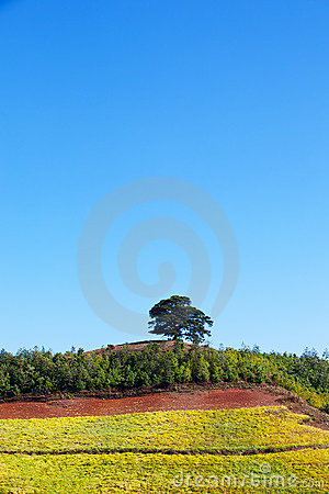 Tree and land in sunny