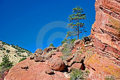Tree and large rocks