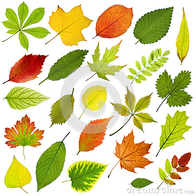 Free Tree Leaves Royalty Free Stock Image - 30233966