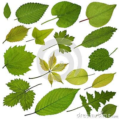 Free Tree Leaves Royalty Free Stock Photos - 30234158