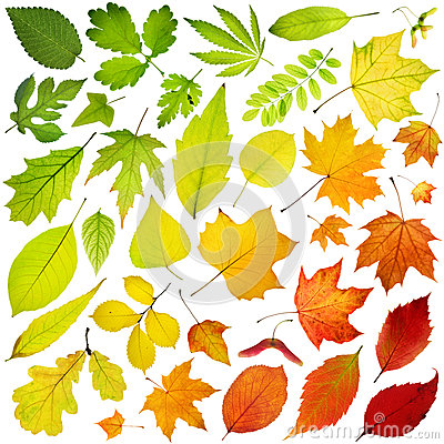 Free Tree Leaves Royalty Free Stock Photo - 30298555
