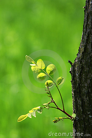 Tree leaves in spring