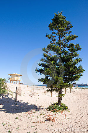 Tree and life guard tower on a beach