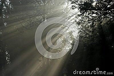Tree light II