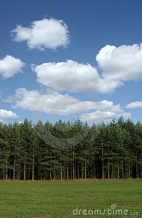 Free Tree Line With Cumulus Clouds Stock Image - 1846921