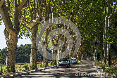 Tree lined road in the South of France