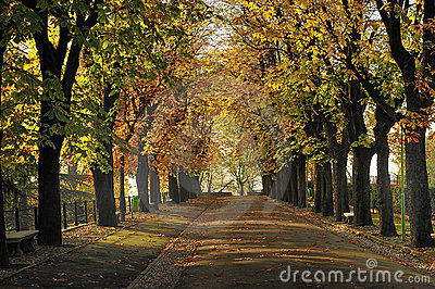 Tree Lined Street in Autumn