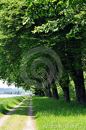 Tree_lined_track