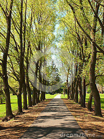 Tree lined walkway
