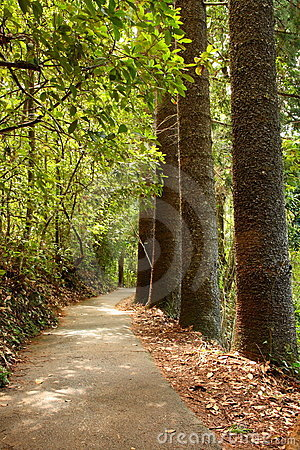 Tree lined woodland forest path