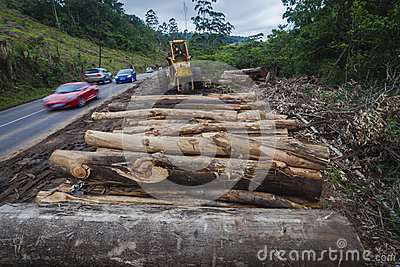 Tree Logs Road Vehicles