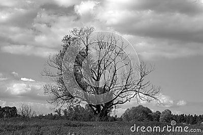 Tree lonely in field