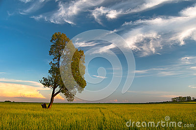 Tree on the meadow and blue sky