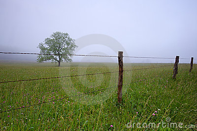Tree in the meadow with fog