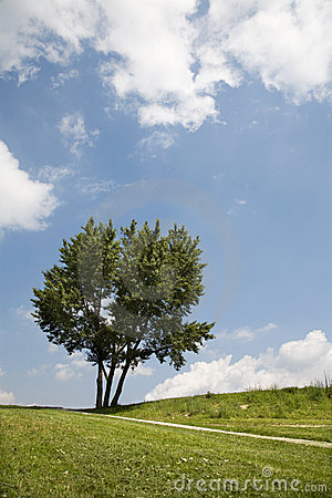 Tree meadow and the sky