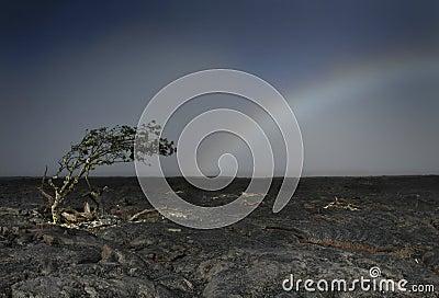 Tree Mimics Rainbow