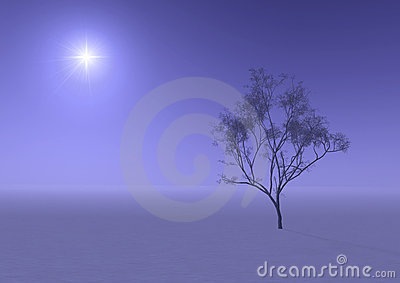 Tree in misty haze