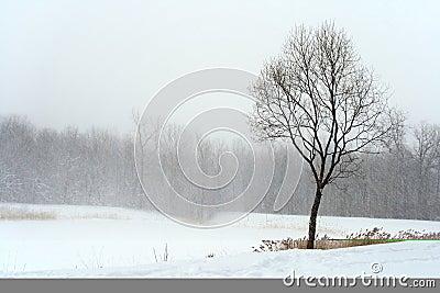 Tree in misty haze of winter blizzard