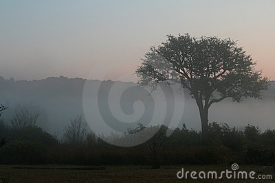 Tree on a misty morning