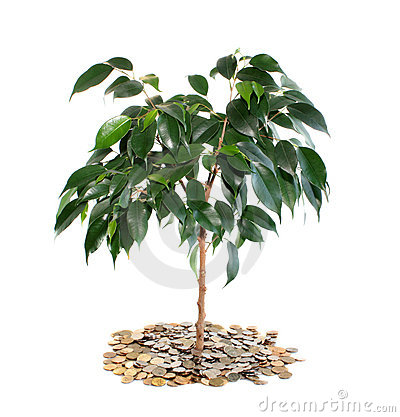 Tree on money, isolated.