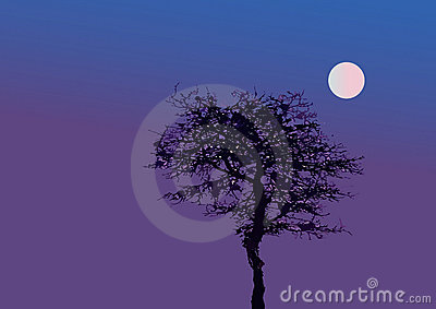 Tree at moonlight