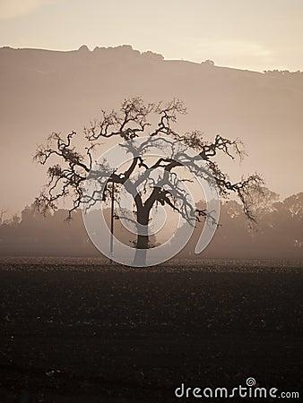 Tree in the morning fog