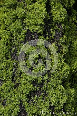 Tree Moss and Bark