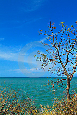 Tree from the mountain with sea