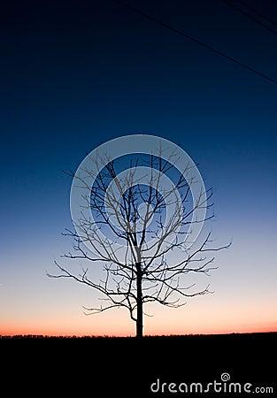 Tree in night