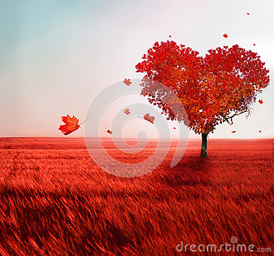 Free Tree Of Love Royalty Free Stock Photography - 37616637