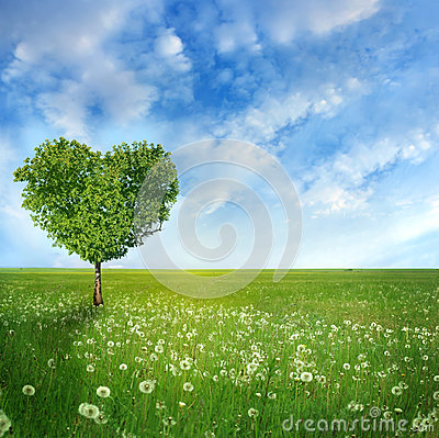 Free Tree Of Love Stock Photography - 41321212