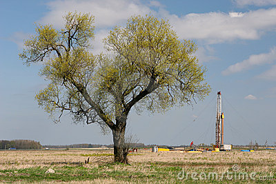Tree and oil drilling rig