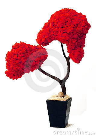 Tree old bark wood leaf leaves planter red