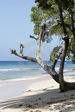 Free Tree On Beach Royalty Free Stock Images - 492119