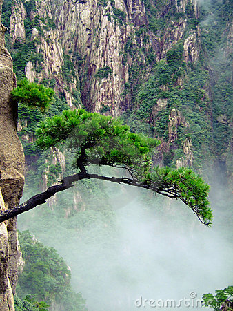 Free Tree On Cliff Royalty Free Stock Images - 3437579