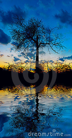 Free Tree On The Water Stock Image - 7704351