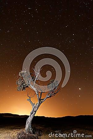 Tree during an orange dusk