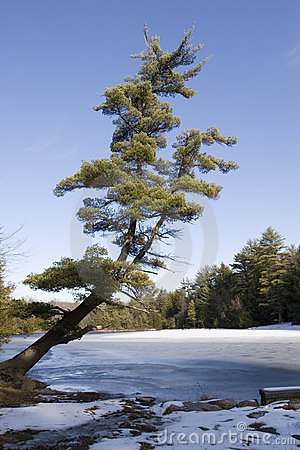Tree over frozen lake