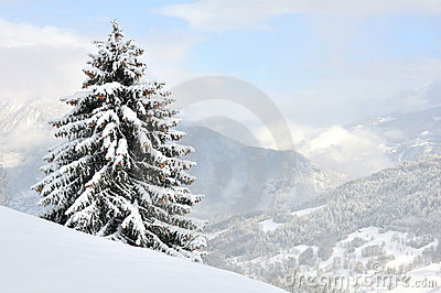 A tree overlooking the snowy mountain