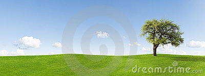 Tree in panoramic countryside